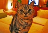 人生初の『猫不在生活』