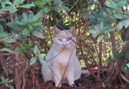 池袋、茂みの中の美猫 東京猫町散歩 師匠編02