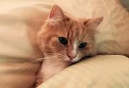 災害時に猫ちゃんと同伴避難の備えを!