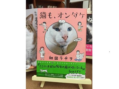 猫も、オンダケ (2)