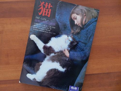 「猫」写真1