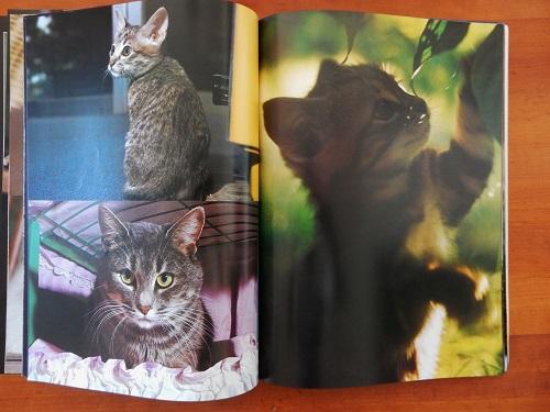 「猫」写真3
