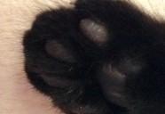 なぜ足音を立てずに歩けるの?猫の脚のヒミツ