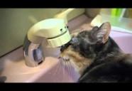 これはスゴイ!独自の水飲みスタイルを貫く熟女猫さん