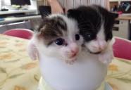 最強やんちゃ子猫兄弟「おはち&おたま」参上!
