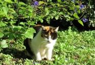日比谷公園、都心の「動物王国」にて 東京猫町散歩 師匠編04