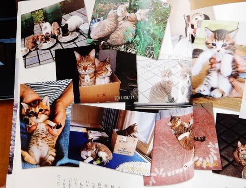 写真7「猫2」 (500x382)