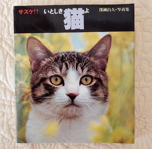 昭和猫サスケ1 (500x489)
