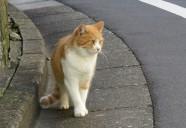 雑司が谷、ライバル対決!1組目 東京猫町散歩 師匠編05