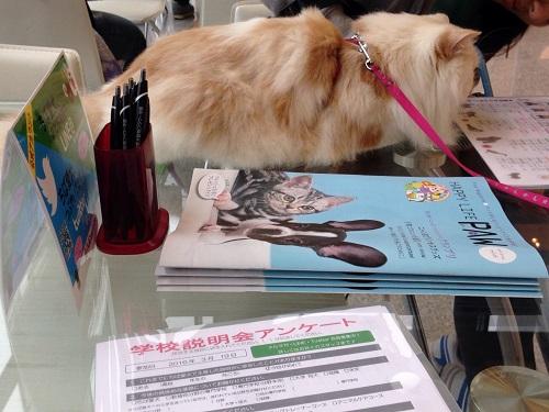 ちば愛犬動物フラワー学園3