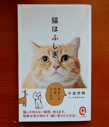 猫は不思議表紙 (428x500)
