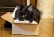猫族あるある!空き箱編 (ライター茶々)