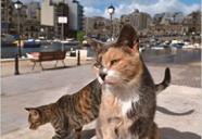 新美敬子写真展「マルタの猫」 with トークイベント