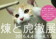 V系バンドマンに保護され、すくすくと成長した子猫 『煉と虎徹』の写真展が開催