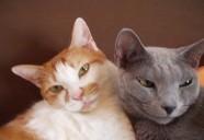 保護猫のロシアンブルー 猫という現象  - マンション騒動記④ -