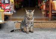 ハノイの怒れる店番ネコ | 世界のニャ窓から file #12