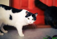 猫にも個性があるんです ~猫好きさんでも意外と知らない猫のこと②~