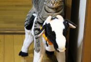 猫あるある ガブ飲み最高! 水道編 (ライター寅次郎)