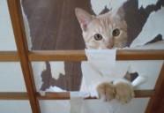 「ペット可」なのになんで猫は不可なの?