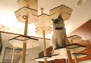 愛猫との暮らしをワンランクアップさせる「おとなのねこ展2」が6月16日~南青山で開催
