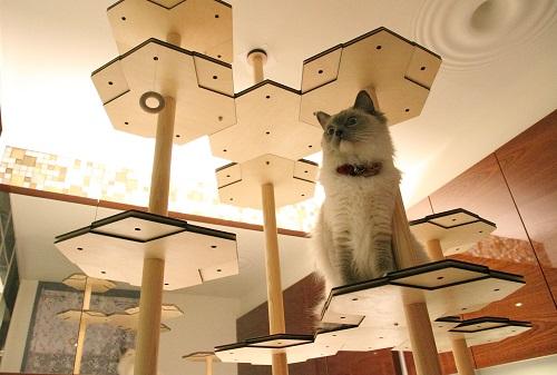 ④組み換え自在型猫タワー