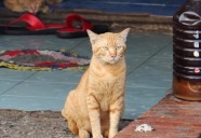 ルアンパバンの悩みネコ | 世界のニャ窓から file #13