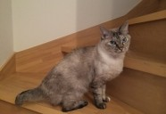 猫にアロマは使えるのか?—ねこにメディカルアロマ01