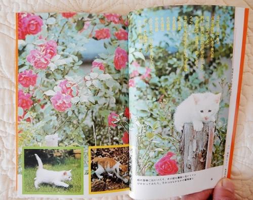 白猫とバラ (500x396)