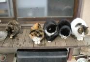 縁側ネコの系譜の巻(里山編) 可愛いだけじゃニャーイ!のよ、縁側ネコはねっ