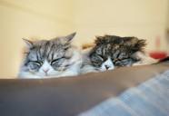 猫の生涯にかかる金額は135万円!猫貯金の必要性