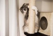 猫の縄張りの条件を満たしている家 - 猫に外出は必要ないかも