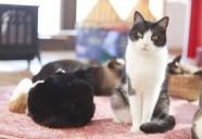 明るく清潔な空間で魅力的な猫に出会える-猫と人のいやし処 そら猫