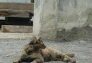 トラさんの歴代トラストーカーの巻 可愛いだけじゃニャーイ!のよ、縁側ネコはねっ