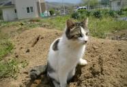 縁側ネコ農法? 可愛いだけじゃニャーイ!のよ、縁側ネコはねっ