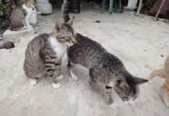 オジサンと猫(1) 猫という現象  - マンション騒動記⑧ -