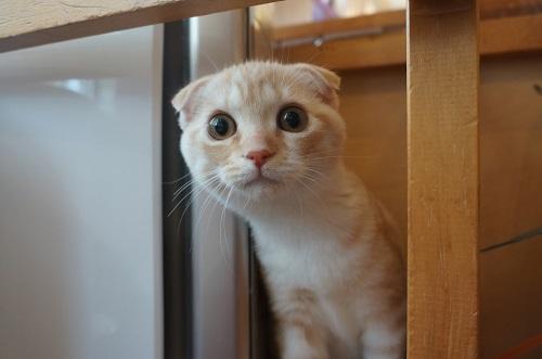 子猫くるみ07321