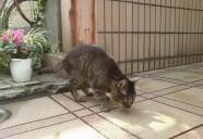 オジサンと猫(2) 猫という現象  - マンション騒動記⑨ -