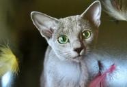 飼い主の61%は、猫の健康診断を受けていない