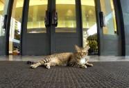 デザイナーズホテルの支配ネコ | 世界のニャ窓から file #14