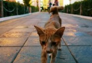 モスクを守るネコ | 世界のニャ窓から file #16