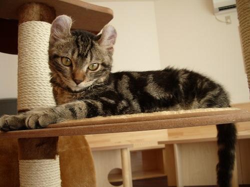 子猫のカールスIMGP0505