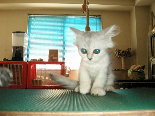 宇宙猫ファビ06.8.7