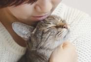 女性一人暮らしの飼い猫は長生きする?