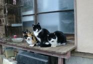 縁側に猫がいる原風景 可愛いだけじゃニャーイ!のよ、縁側ネコはねっ