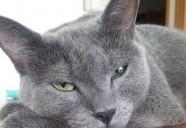 猫のおやつ作りに先制パンチ?!