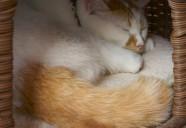 保護猫の家猫修行を切り取った『もりねこカレンダー』