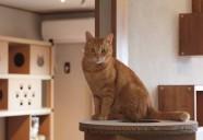 信州信濃の新蕎麦よりも、あたしゃ新酒の方がいい♪お前飲むだけ、わしゃ飲まれるだけ。共に赤猫見えるまで♪