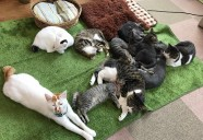 数字だけじゃニャい!猫も人も幸せなZEROを目指して「もりおかZEROキャンペーン」