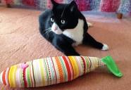 猫に好かれる人とは?~キャットシッターが猫に好かれるコツを伝授します!~