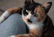 縁側ネコの1日の巻 可愛いだけじゃニャーイ!のよ、縁側ネコはねっ